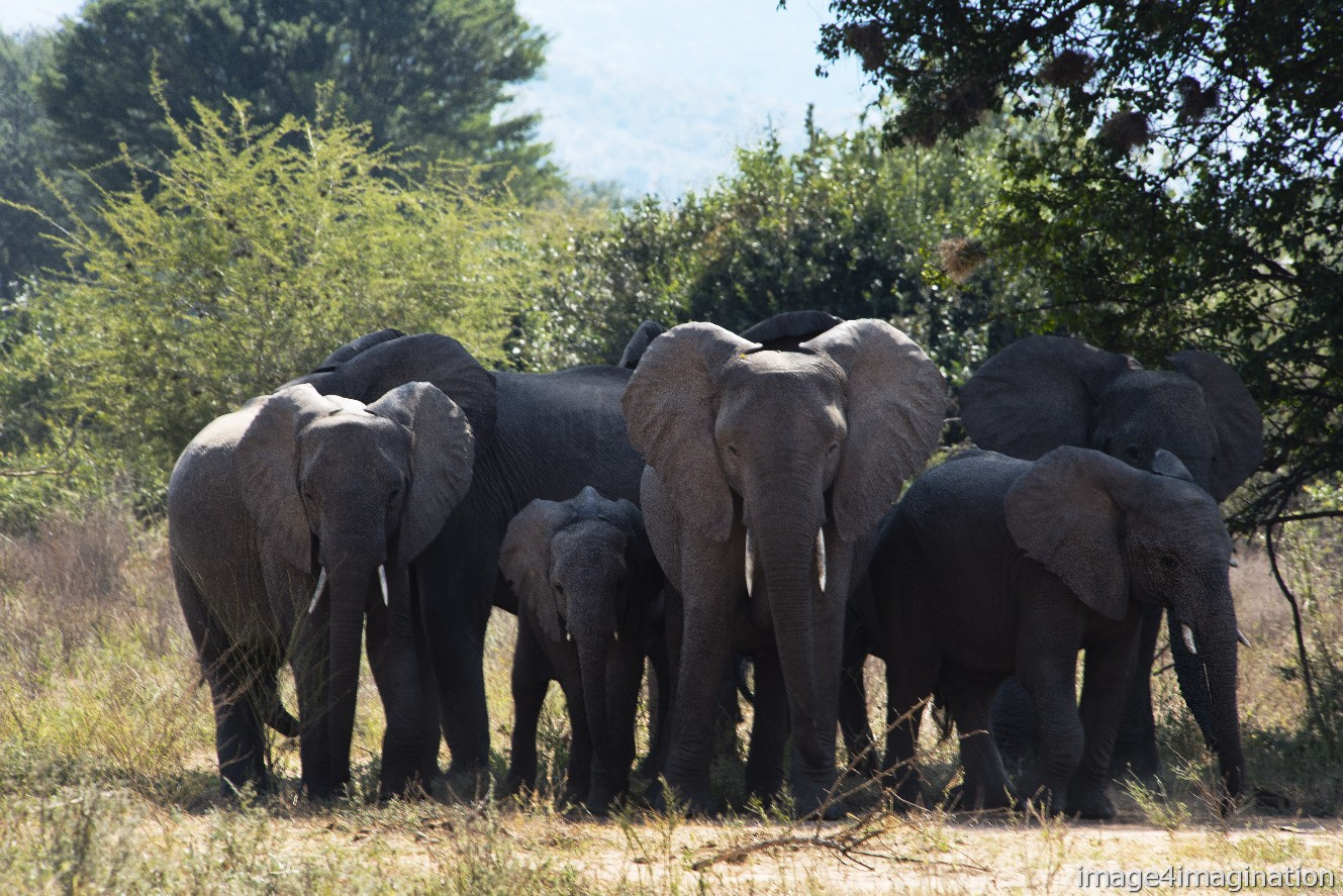 wildlife zambia 2018